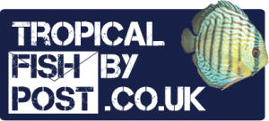 tropicalfishbypost.co.uk